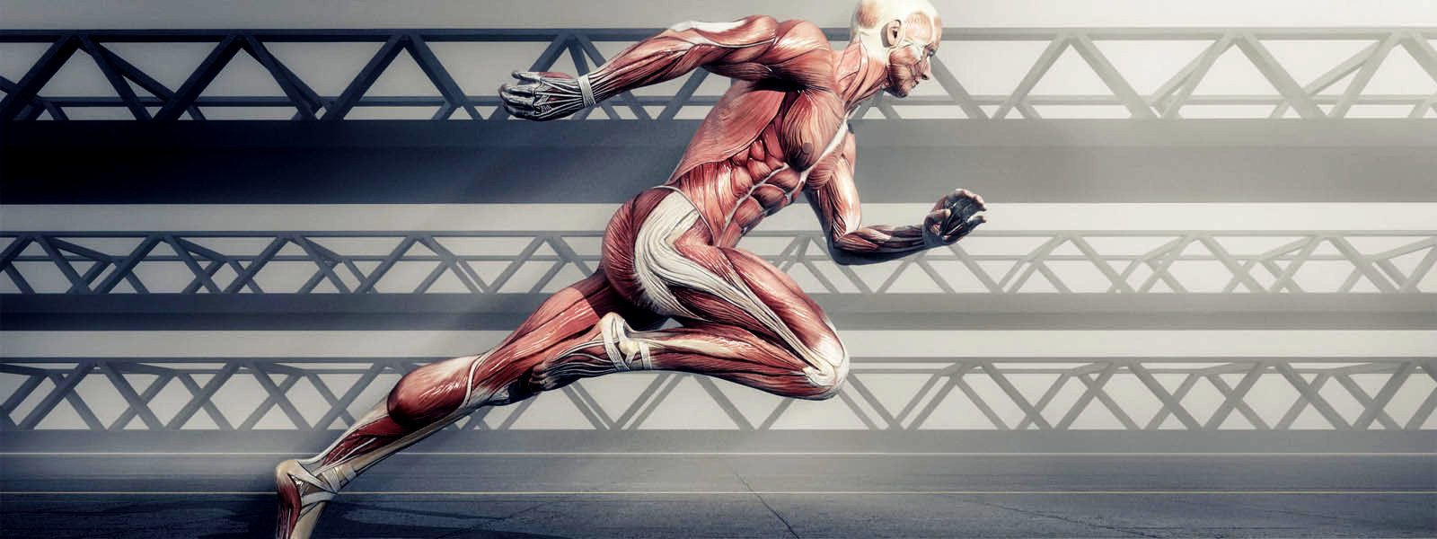 Grafts Hellas banner - Core Fitness Knowledge Course